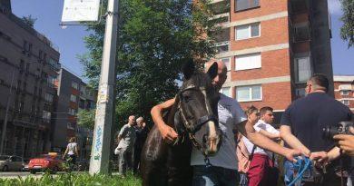 Potkovan konj