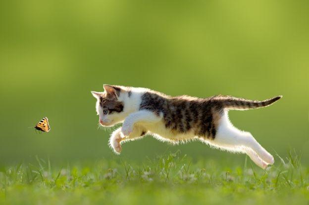 Zanimljivosti o mačkama
