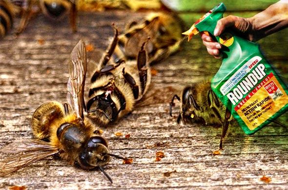 Pomor pčela brazil