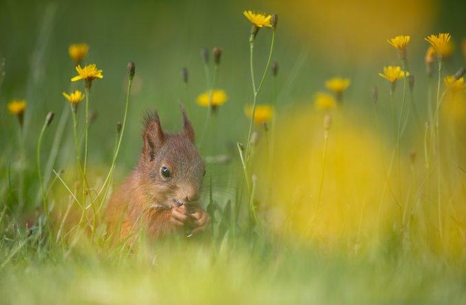 Snimke vjeverice dok jede